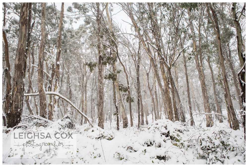 Snow Day Barrington Tops