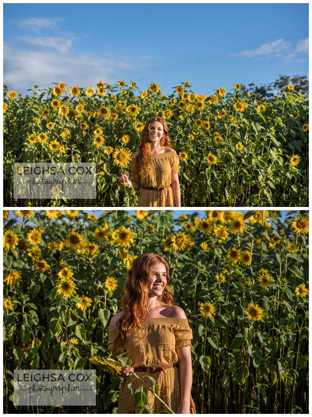 sunshine and sunflowers