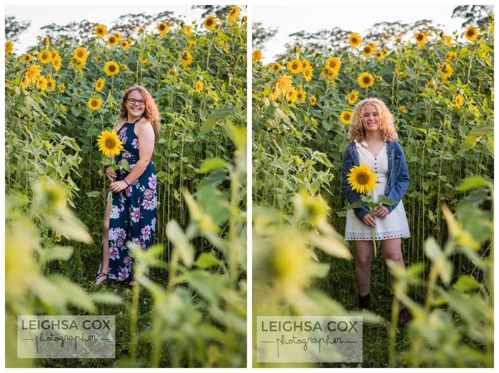 sunflower portraits