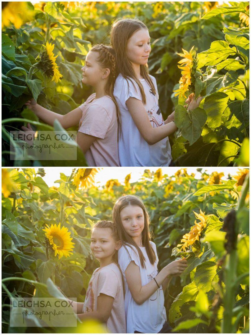 Sunflower fun