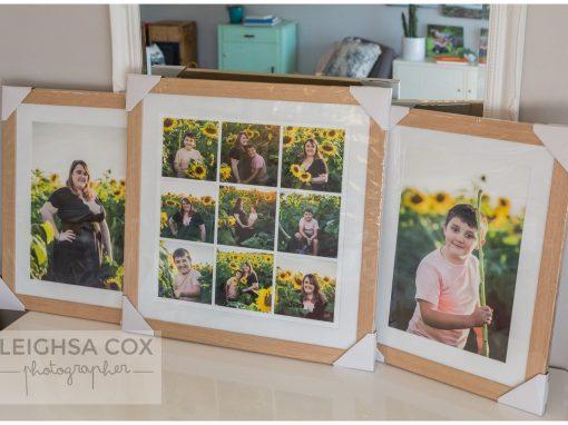 Hunter Valley sunflower Portraits